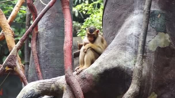 Malá opička sedící na stromě a žvýká jídlo