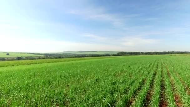 Légifelvételek cukornád ültetvények Brazíliában