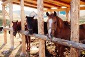 Fotografia bellissimi cavalli nella stalla