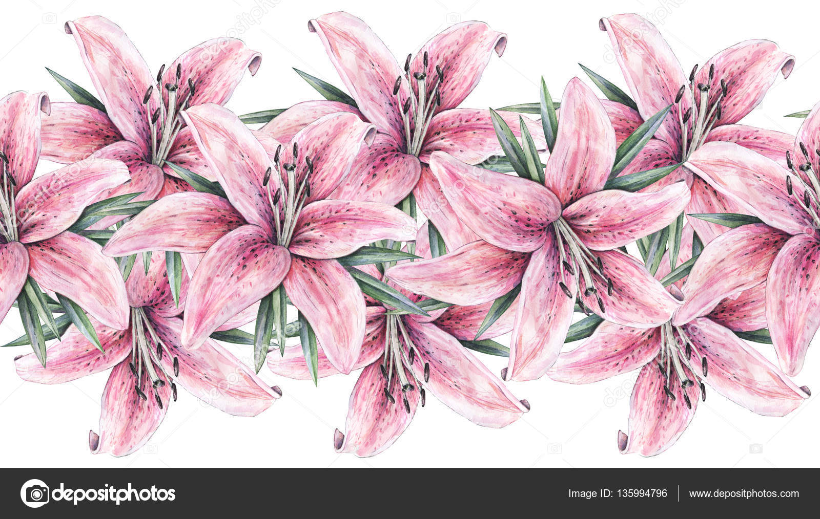 Pink lily flowers isolated on white background watercolor handwork pink lily flowers isolated on white background watercolor handwork illustration drawing of blooming lily izmirmasajfo