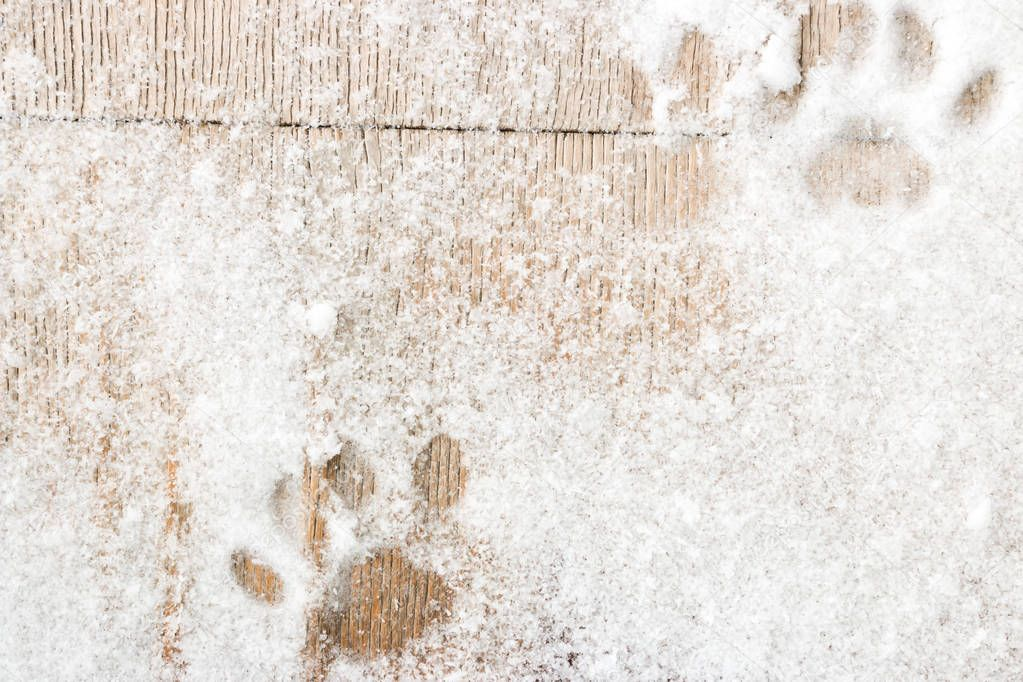 cat footprints on the wooden background with snow