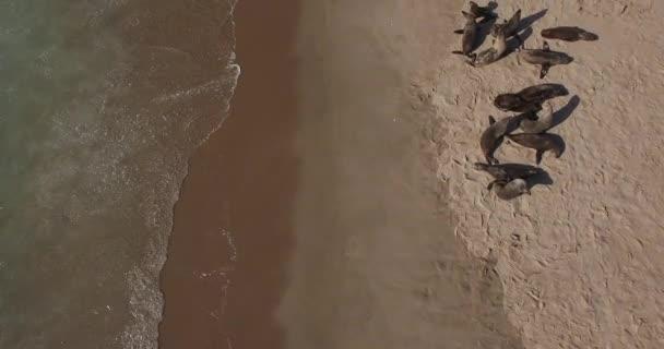 A légi felvétel a magányos homokos-félszigeten, Namíbia, Dél-Afrika