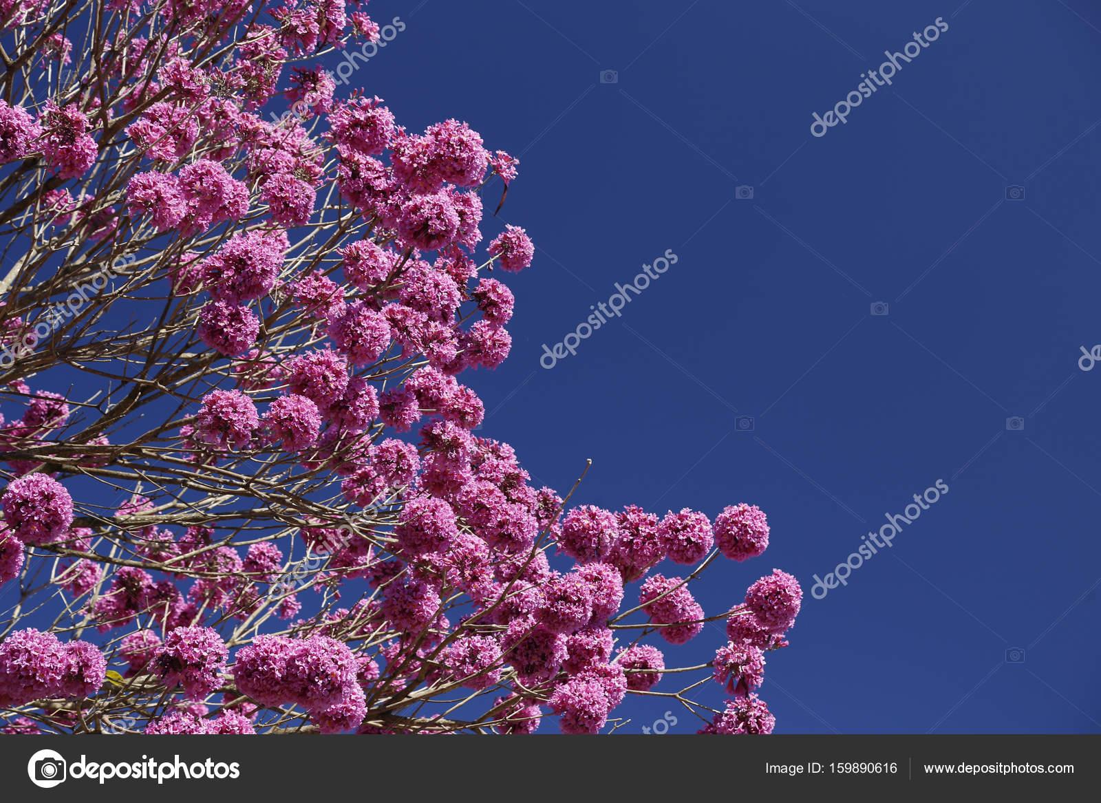 Purple yellow tree with blue sky stock photo sidneydealmeida purple yellow tree with blue sky stock photo izmirmasajfo