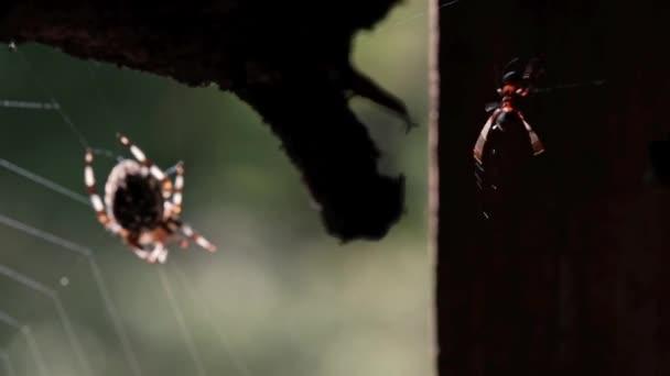 Spinne im Netz im Wald. Das Opfer fiel ins Netz.