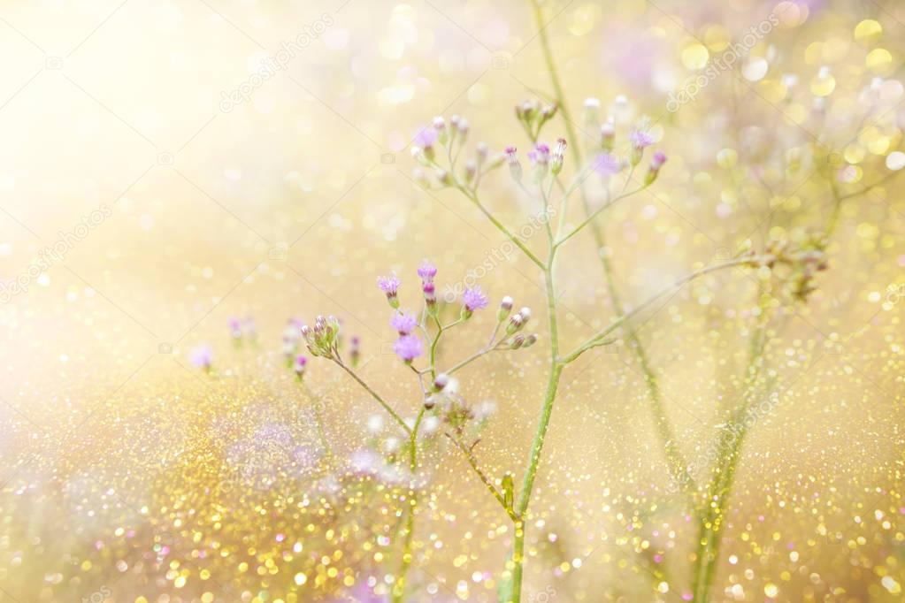 grass flower field in spring background with sunlight in morning