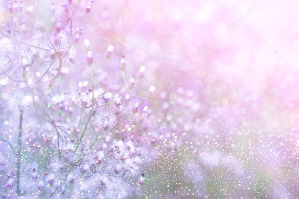 grass flower field in spring background with sunlight in purple pastel tone
