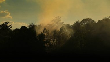 morning scene in the wood. small warm fire creating smoke fog in the forest. slow life peaceful rural living. silhouette jungle view.