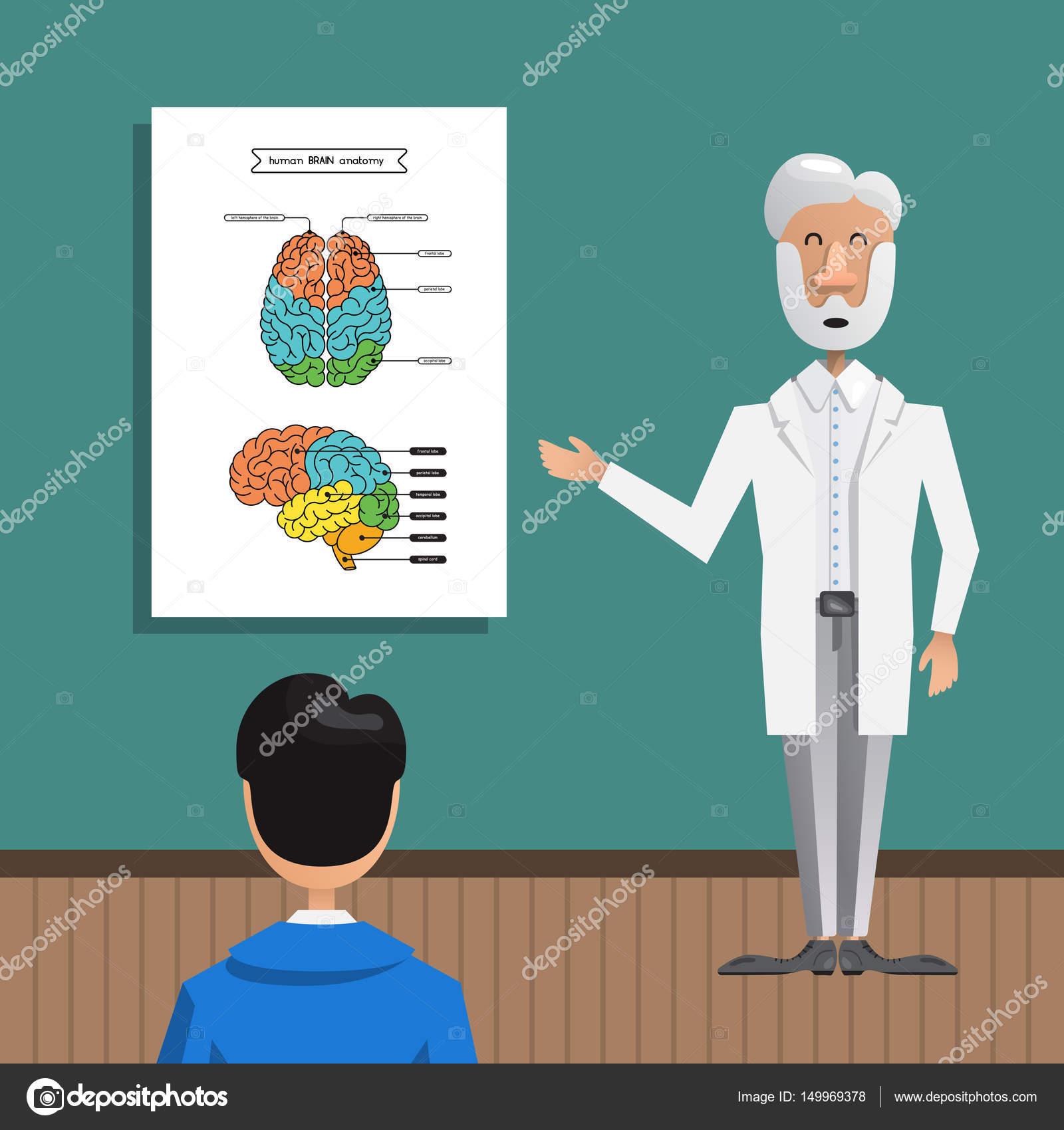 Struktur und Anatomie Gehirn — Stockvektor © shopplaywood #149969378