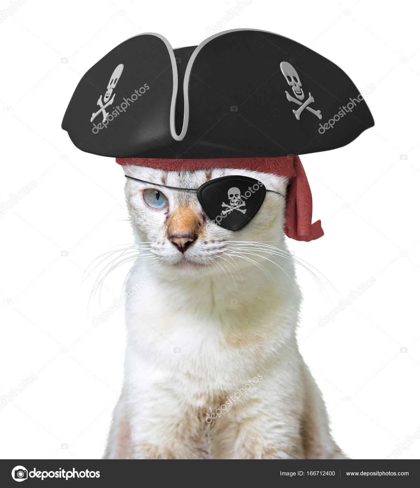 Lustige Tier-Kostüm von einer Katze Piratenkapitän mit einem ...