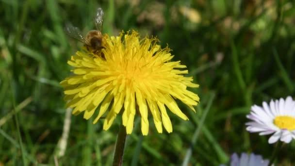 Hmyz na květinách