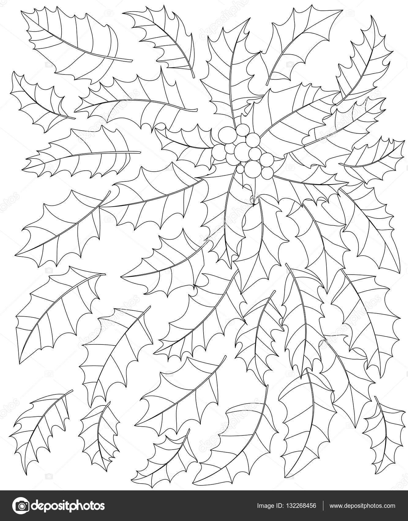 Ilustración de vector blanco y negro de las hojas de acebo y bayas ...