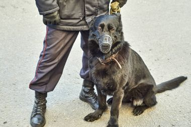 Rus polisi ile bir savaş köpek