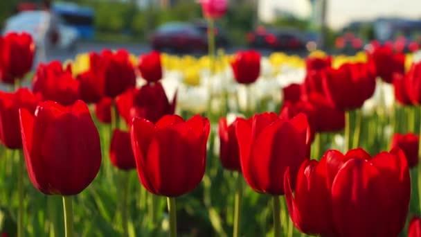 Virág ültetvény a moszkvai strett