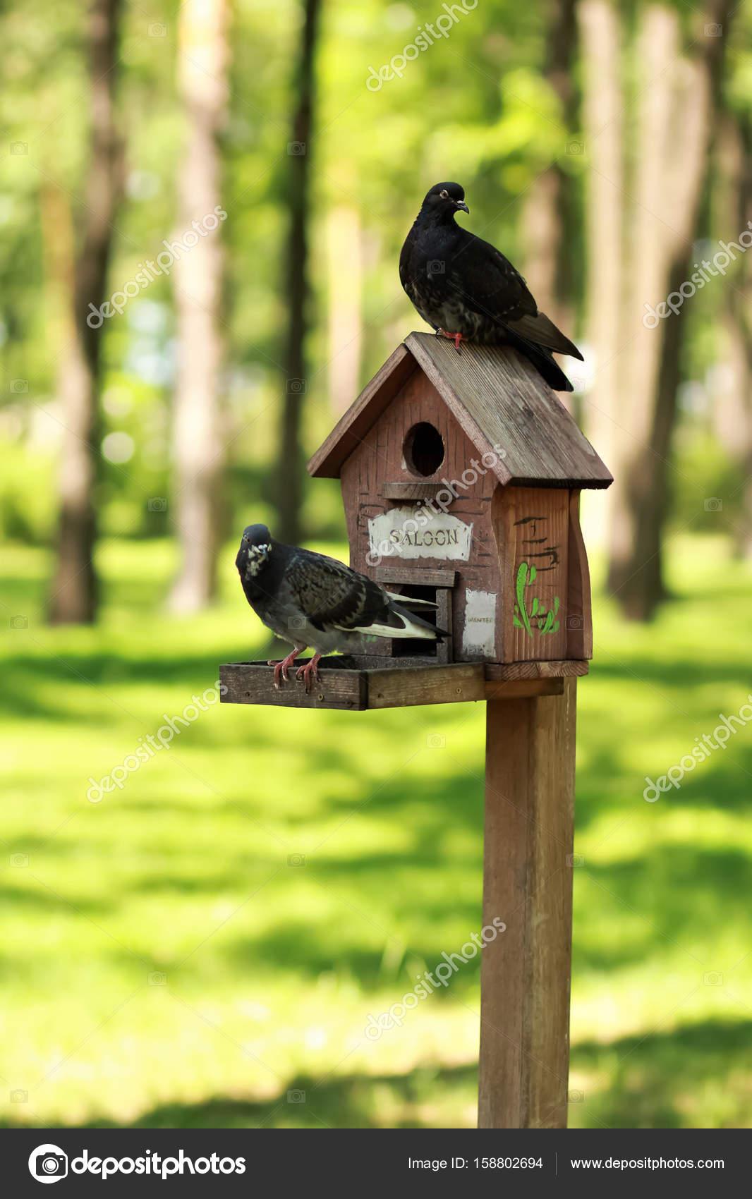 bird com best amazon natural design ihl feeders outdoor home wooden dp garden products feeder bed fir wood breakfast