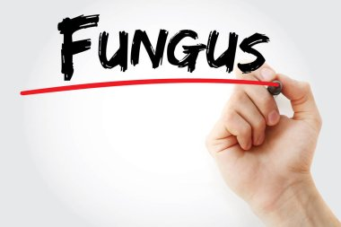Hand writing Fungus with marker