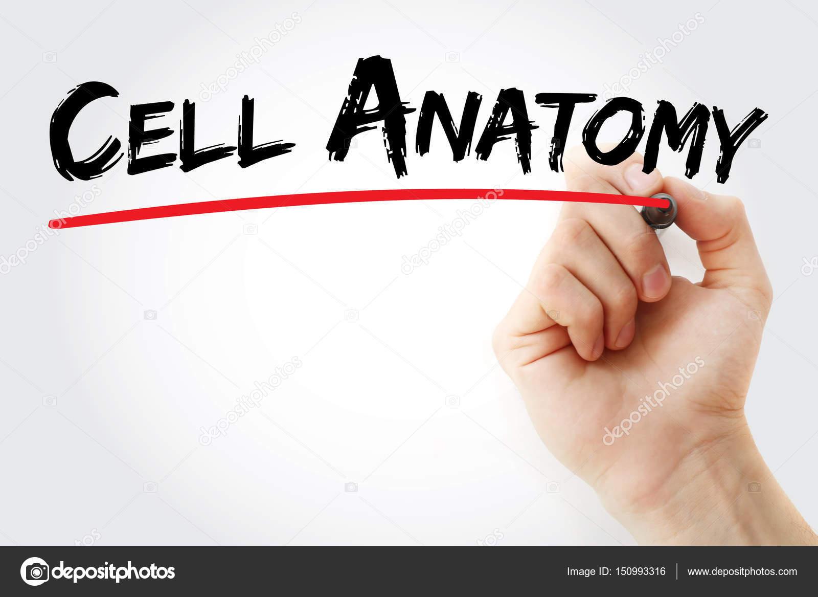 Mano anatomía celular de la escritura con marcador — Foto de stock ...