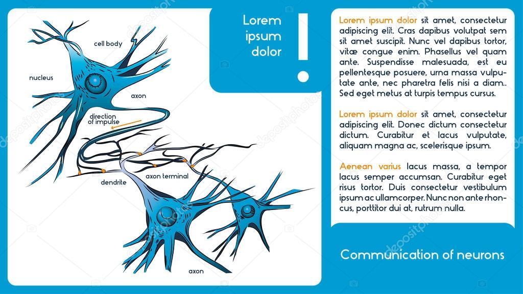 Kommunikation von Nervenzellen. 1 Diagramm mit Neuronen nur ...