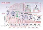 Fotografie Electromagnetic spectrum of a brain infographic