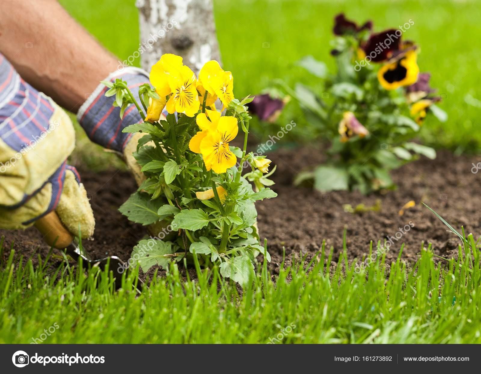 gärtner, blumen pflanzen, im boden — stockfoto © billiondigital