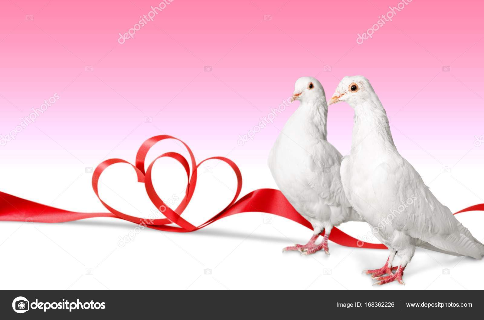 Two white doves — Stock Photo © billiondigital #168362226