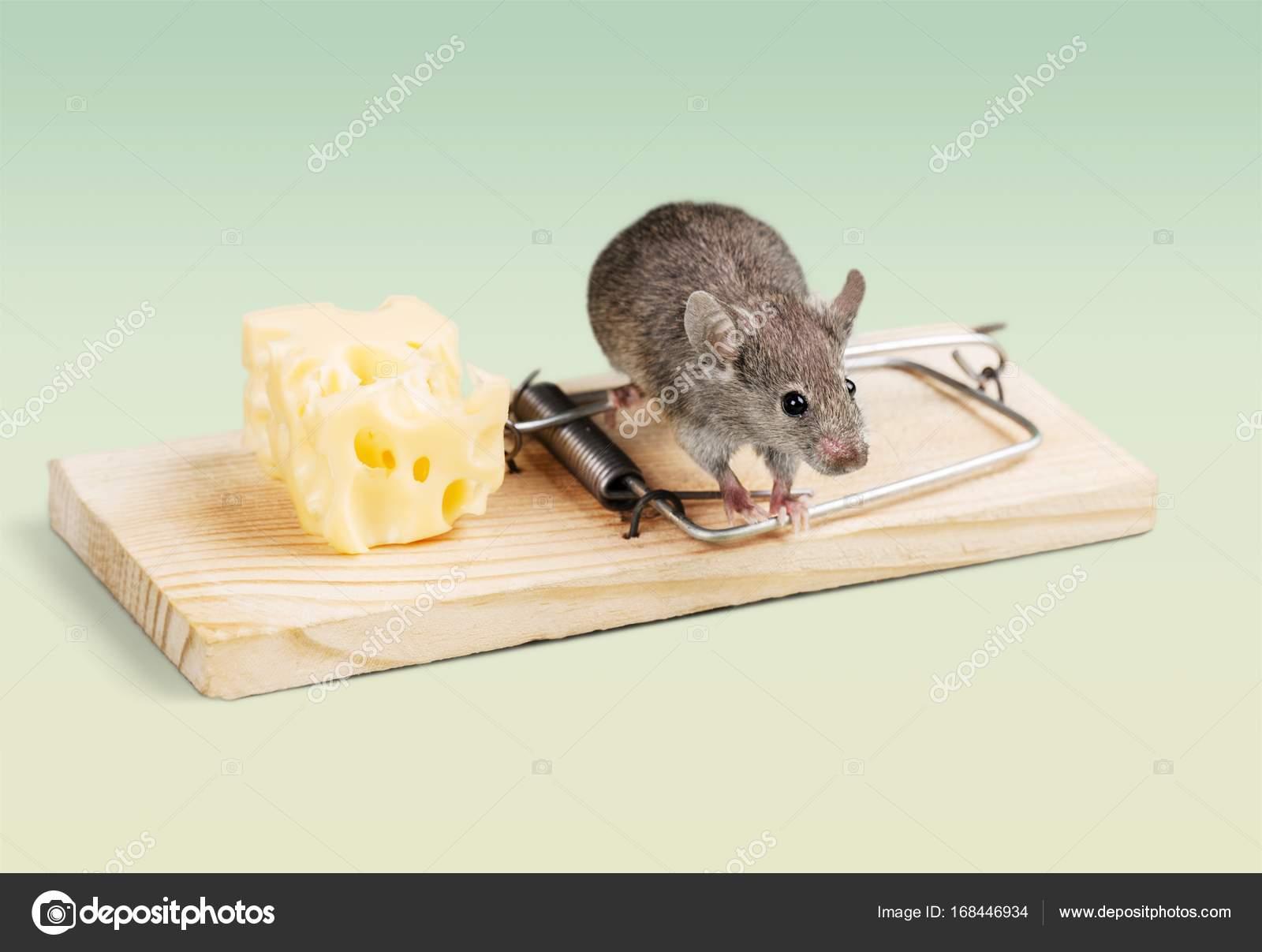 trampa con queso y el ratón — Foto de stock © billiondigital #168446934
