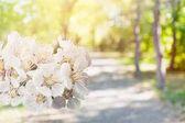 Jarní květ květiny detailní pohled