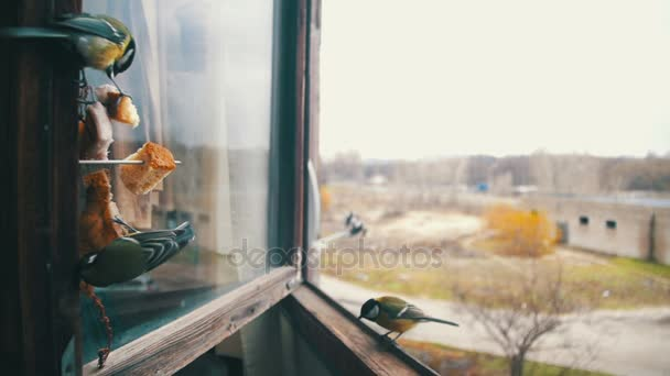 Květiny na parapetu pták jí chleba a sádlo na dřevěné okenní parapet. Zpomalený pohyb