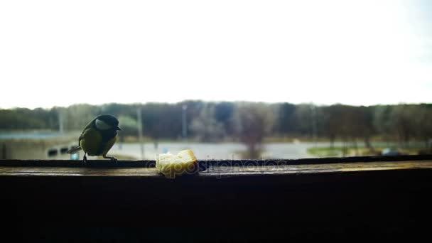 Květiny na parapetu pták jí chléb na dřevěné okenní parapet. Zpomalený pohyb