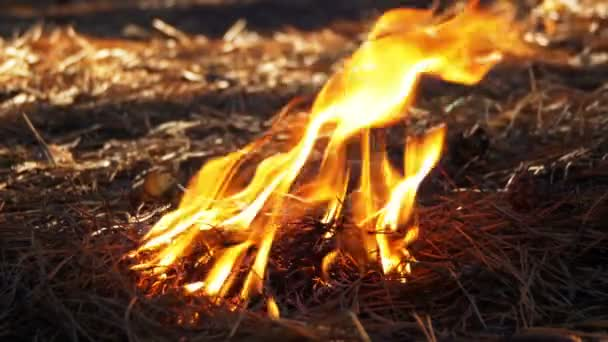 Feuer in einem Kiefernwald