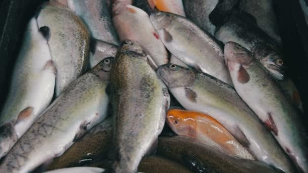 Čerstvé ryby v ledu na mimoburzovním trhu