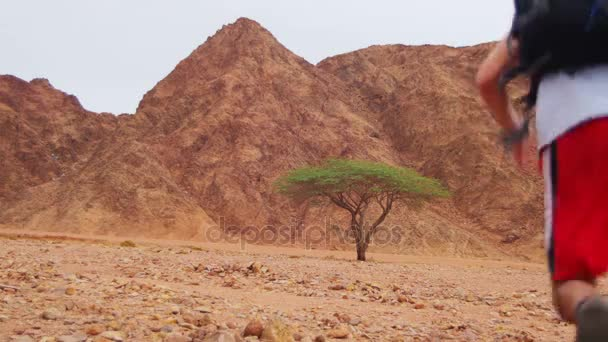 Lost in the Desert Man Runs to the Green Tree and Shade