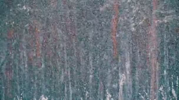 Sníh padá v zimě borovém lese