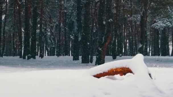 Sníh a borový les - Vánoční pozadí