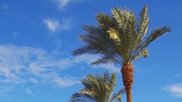 Palmové stromy proti modré obloze. Letní pozadí