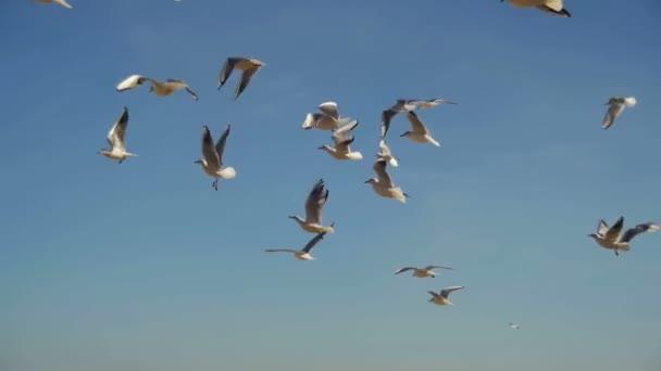 Racky letící ve vzduchu a Catch potraviny na pozadí modré oblohy. Zpomalený pohyb