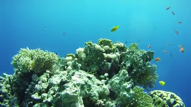 Krásné barevné tropické ryby na zářivé korálové útesy pod vodou v Rudém moři