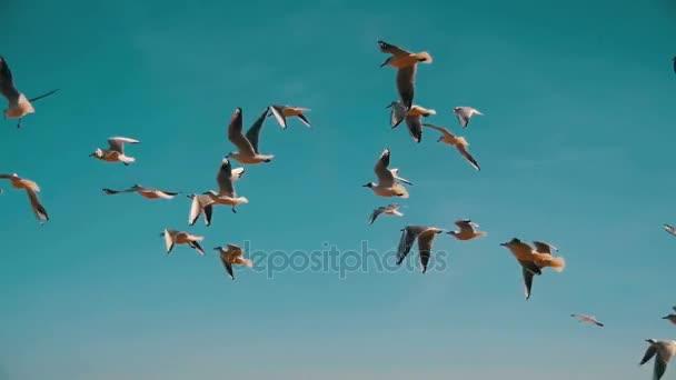Sirályok repülnek a levegőben, és a fogási élelmiszer, a kék ég háttér. Lassú mozgás