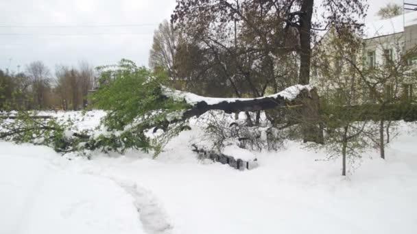 Szokatlan időjárás áprilisban, a tavaszi. Kidőlt fák után egy hóvihar