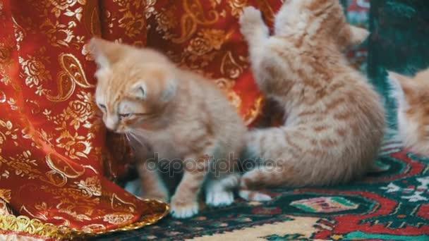 Bezdomovec červená koťátka olízl na ulici. Zpomalený pohyb