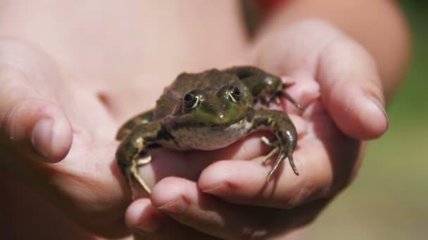 Zöld béka a kezében a gyermek, a folyó partján. Lassú mozgás