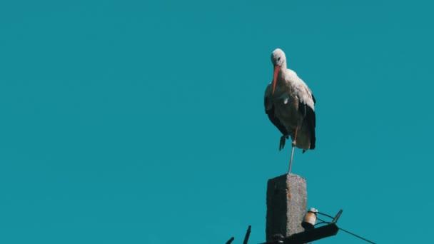 Čáp sedí na sloup vysokého napětí elektrického vedení na pozadí modré oblohy