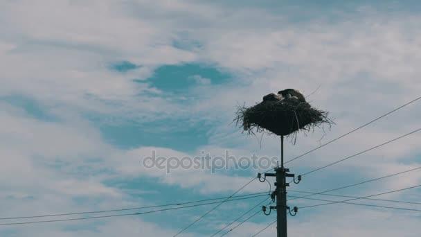 Čápi rodina ve svém hnízdě na pilíři. Časová prodleva