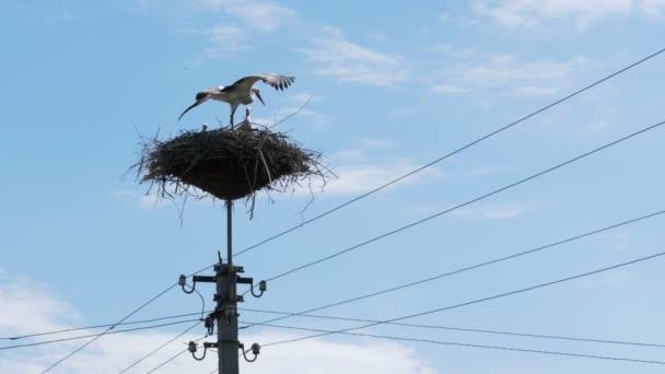 Čáp sedí v hnízdě na sloup vysokého napětí elektrického vedení na pozadí oblohy