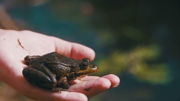 Grüner Frosch in den Händen eines Kindes am Ufer des Flusses. Zeitlupe