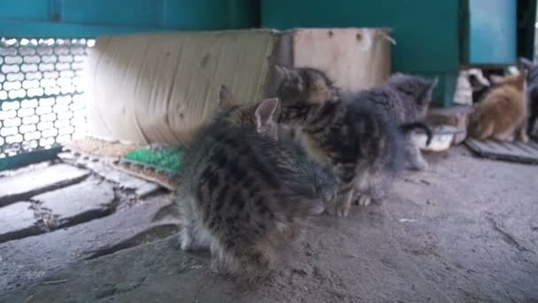 Little Gray and White Homeless Kitten Looks into the Camera. Slow Motion