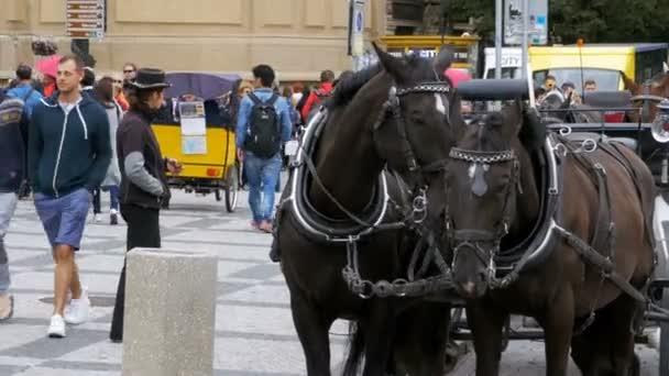 Vozík s koňmi stojí na Stare Mesto náměstí ve starém městě, Praha, Česká republika