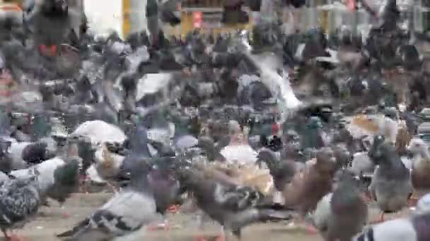 Huge Flock of Pigeons in the City Park