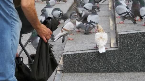 Woman is Feeding Pigeons on the Street