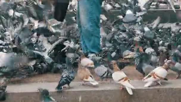 Crowd of Pigeons at the Feet of a Man on the Sidewalk
