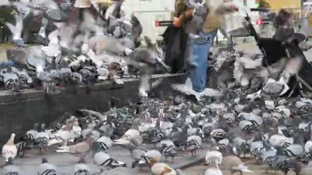 Old Woman Feeding Pigeons on the Street in Slow Motion